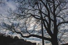 Ett deprimerande ensamt avlövat träd royaltyfri bild