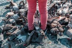 Ett detaljslut upp av ett barn som matar en grupp av duvor på set fotografering för bildbyråer