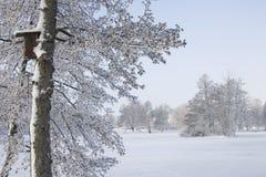 Ett djupfryst träd med ett fågelrede Arkivbilder