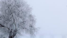 Ett djupfryst träd som täckas med frost Arkivfoton