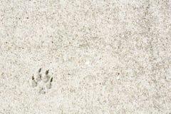 Ett djurt fotspår på den beigea trottoaren Royaltyfri Foto