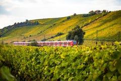 Ett drev kör till och med höstliga vingårdar royaltyfria foton