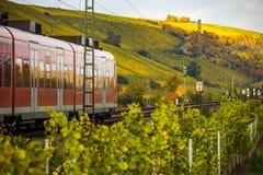 Ett drev kör till och med höstliga vingårdar Arkivbilder