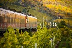 Ett drev kör till och med höstliga vingårdar arkivfoton