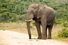 Ett elefantanseende på en grusväg Arkivfoto