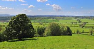 Ett engelskt lantligt landskap i Somerset Royaltyfria Bilder