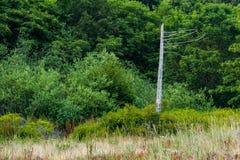 ett enkelt dött träd på kanten av en skog Fotografering för Bildbyråer