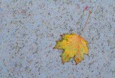 Ett enkelt gult blad på jordningen Royaltyfria Bilder