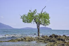 Ett enkelt perent träd som vaggar i havet arkivbild