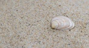 Ett enkelt skal i sanden arkivbild