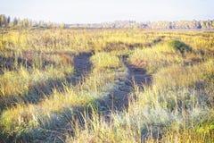 Ett enkelt spår i ett gult höstfält, som bakgrund arkivbilder