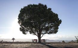 Ett enkelt träd i Kreta Royaltyfri Fotografi