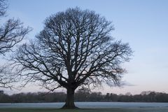 Ett enkelt träd på en frostig morgon på gemensamma Southampton Arkivfoton