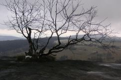 Ett enkelt träd på vagga Arkivfoton