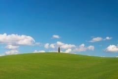 Ett ensamt cypressträd på kullen Arkivbild