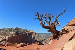Ett ensamt naket träd klamra sig fast intill kanten av en klippa Royaltyfri Foto