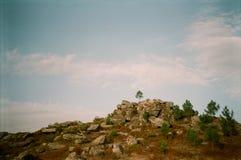 Ett ensamt träd överst av kullen arkivfoto