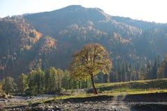 Ett ensamt träd Arkivfoton
