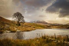 Ett ensamt träd av Llyn Dywarchen i den Snowdonia nationalparken en korkad montering Snowdon för snö är i avståndet royaltyfria bilder