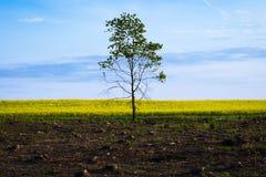 Ett ensamt träd efter ha avverkat Royaltyfria Foton