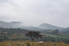 Ett ensamt träd framme av kullarna arkivbilder