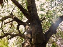 Ett ensamt träd i natur Royaltyfri Fotografi