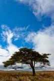 Ett ensamt träd med blå himmel Julian Bound Royaltyfria Bilder