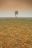 Ett ensamt träd och lökfält i vinter under solen på norden Fotografering för Bildbyråer