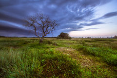 Ett ensamt träd på fältet i Malaysia Arkivfoton