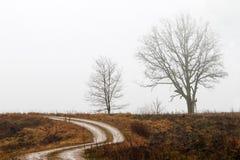 Ett ensamt träd på sidan av vägen Arkivfoto