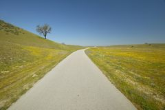 Ett ensamt träd på sidan av vägen som omges vid våren, blommar, av av gammal rutt 58 i Kalifornien, Shell Creek Road Royaltyfri Fotografi