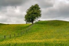 Ett ensamt träd ett staket i en blomma fyllde tillsammans med ängen Arkivbilder