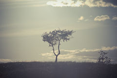 Ett ensamt träd uppe på en kulle Royaltyfri Bild