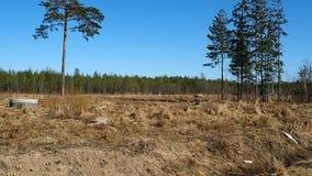 Ett ensamt tr?d i ett f?lt S?rja st?llningar p? kanten av skogdetaljerna arkivfilmer