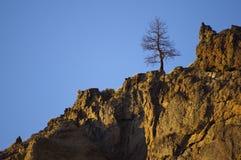 Ett ensligt vaktpostträd. Royaltyfri Bild