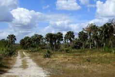 Ett Evergladesdrev till och med hängmattan Royaltyfria Foton