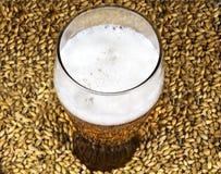 Ett exponeringsglas av öl på bakgrunden av malt Royaltyfria Bilder