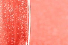 Ett exponeringsglas av champagne på suddig bakgrund Makro royaltyfri bild