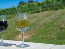 Ett exponeringsglas av sammanträde för vitt vin på den utomhus- väggen framme av vinodlingkolonin royaltyfri foto