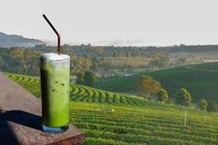 Ett exponeringsglas av smoothies för grönt te i den organiska planatien för grönt te Royaltyfri Foto