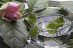 Ett exponeringsglas av vatten med mintkaramellen på gräsplansidorna och steg Arkivfoton