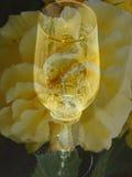 Ett exponeringsglas av vin på bakgrunden av blomman stor blommayellow Arkivbilder