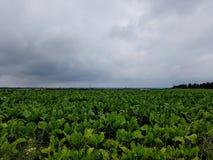 Ett fält Arkivbild