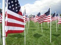 Ett fält av amerikanska flaggan på dag för veteran` s Arkivfoto