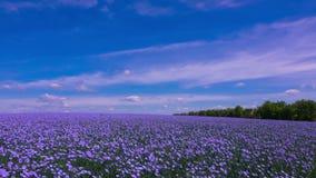 Ett fält av blomninglin lager videofilmer