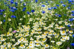 Ett fält av det lösa färgglade landet blommar och växter Arkivbilder