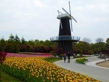 Ett fält av färgglade tulpan och windwill Arkivfoto