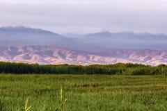 Ett fält av gräs och buskar mot bakgrunden av enorma gröna berg royaltyfri bild