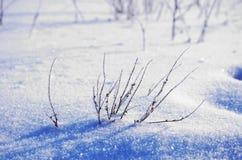 Ett fält av snö med döda filialer Royaltyfri Bild