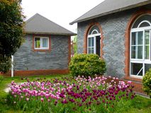 Ett fält av tulpan framme av två hus Arkivbilder